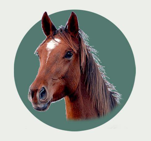 מדברים סוסים – רכיבה על סוסים