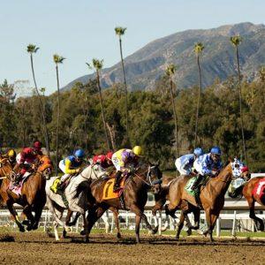 21 סוסים מתו במסלול מירוצים בקליפורניה מאז דצמבר