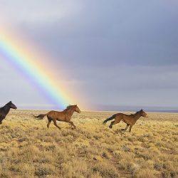 אמצו סוס – קבלו אלף דולר