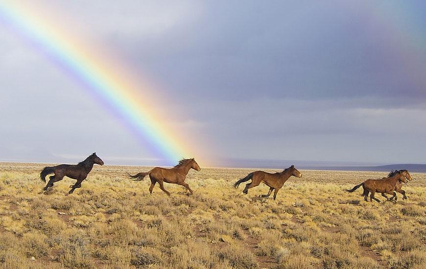 אימוץ סוסי פרא