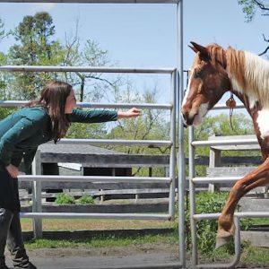 סוס פרא שהפך לחבר אמת