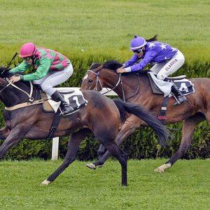 שני סוסים נוספים מתו במסלול המירוצים סנטה אניטה