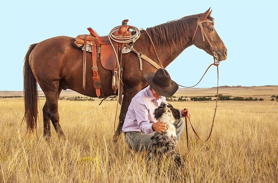 בטיחות סוסים