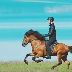 חמשת המקצבים של סוסים איסלנדיים