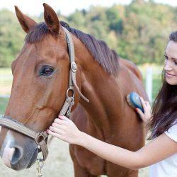 האם סוסים אוהבים שמברישים אותם?