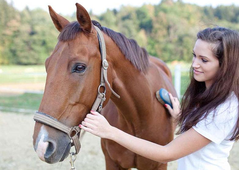 הברשת סוסים