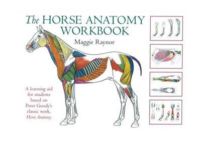 האנטומיה של הסוס