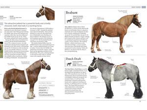 האנציקלופדיה של הסוס