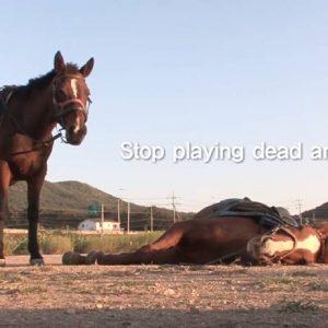 סוס עצל, חכם או מאולף למופת?