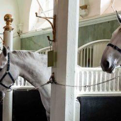 """רוצים להיות עובדי אורווה של המלכה? 22 אלף ליש""""ט בשנה ומגורים בארמון בקינגהאם"""