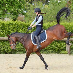 סימנים שהסוס שלכם צולע – או שכואב לו בעת הרכיבה