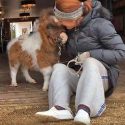 סוסה מיניאטורית עם בעיות ברגליים זכתה לבית חם