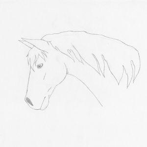 איך לצייר סוס מזוויות שונות
