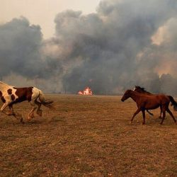 שריפות הענק באוסטרליה: רוכבים מכל העולם מתגייסים לטובת הסוסים