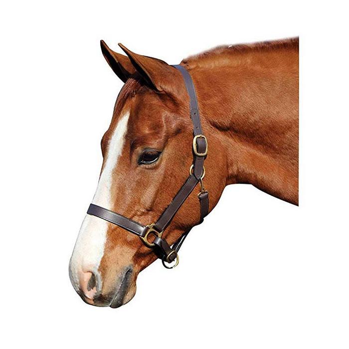 ראשיית בית מעור לסוס
