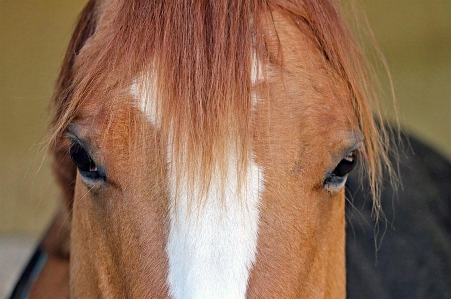 סוסים מזהים תמונות