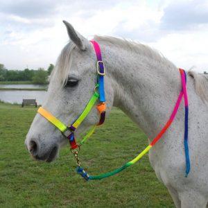 האם סוסים מעדיפים צבעים מסוימים?