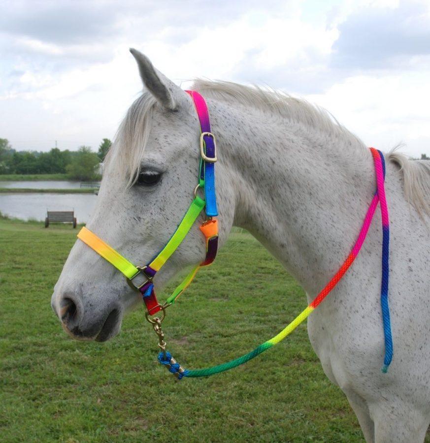 סוסים צבעים