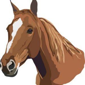 עונש של 20 שנות השעיה לרוכב שהואשם בהתעללות בסוס
