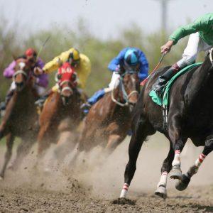 שימוש בשוט לא משפר את איכות ודיוק הריצה של סוסים במירוצים