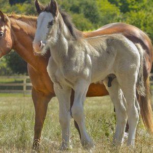 14 עובדות מעניינות על סוסים