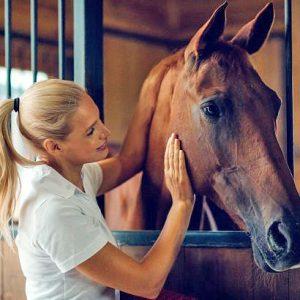 """מדברים עם הסוסים שלכם ב""""תינוקית""""? ייתכן שזה עוזר"""