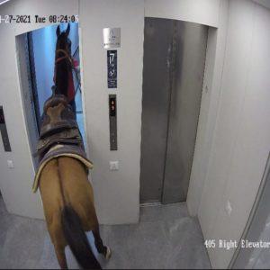 המקרה המוזר של הסוס במעלית בתל אביב