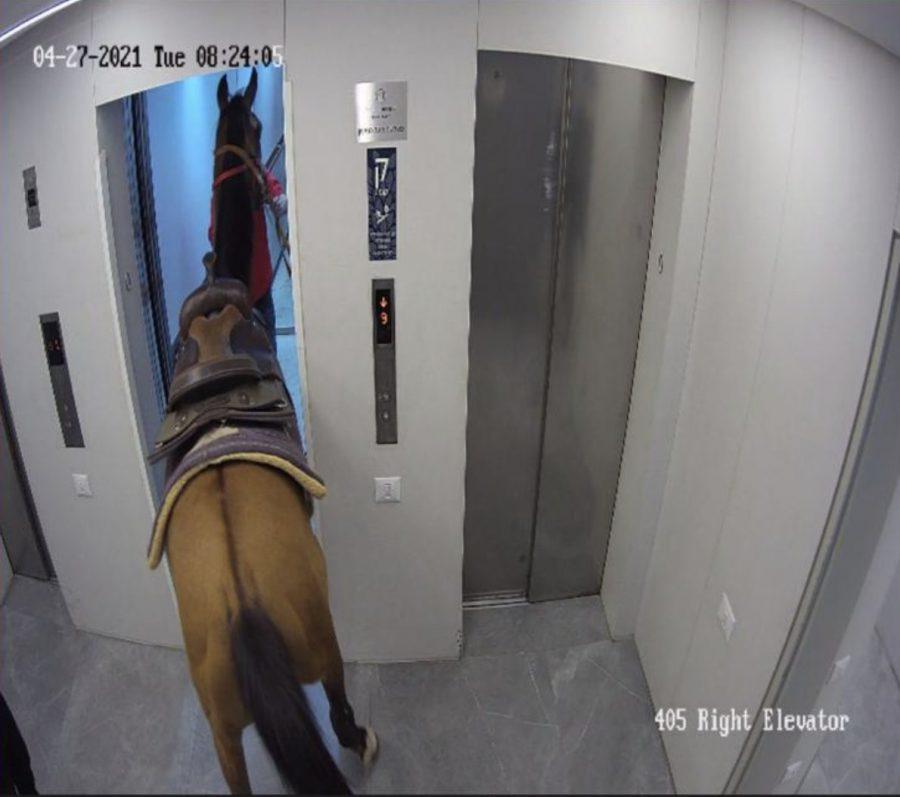 סוס במעלית תל אביב