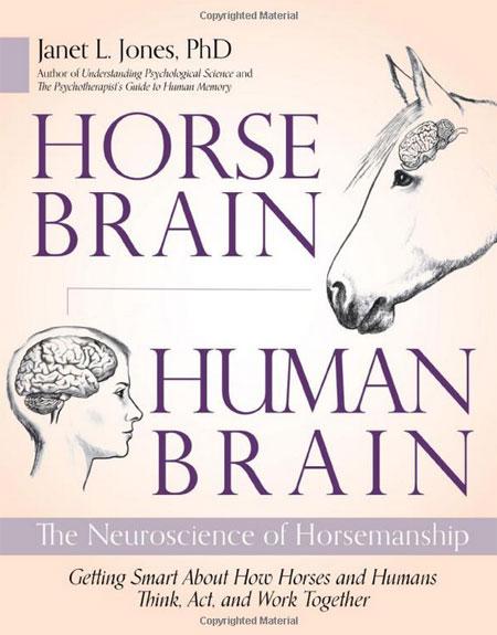 מוח של סוס מוח של אדם