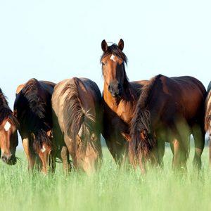הסוסים של דניאל וולדמן לא יוצאים למרעה