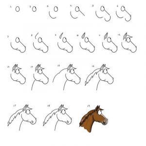 איך לצייר סוס – מדריך בסיסי לציור ראש של סוס