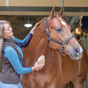 עד כמה סוסים חכמים?