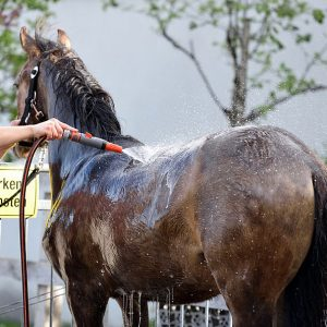 שטיפת סוסים: איך עושים מקלחת לסוס?