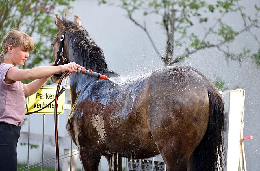 שטיפת סוסים
